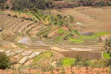 Rijstvelden, Ambositra