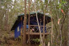 Lemur Forrest Camp