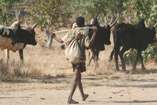Herder met bultruggen - Onderweg naar Ranohira - Madagaskar